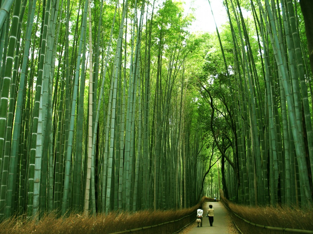 the invisible progress of the chinese bamboo tree kumar s blog